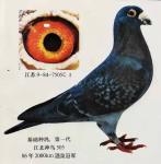 江北神鸟505