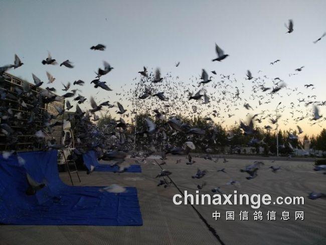 北京西城昌平争霸赛一人独揽前五名 最高分速