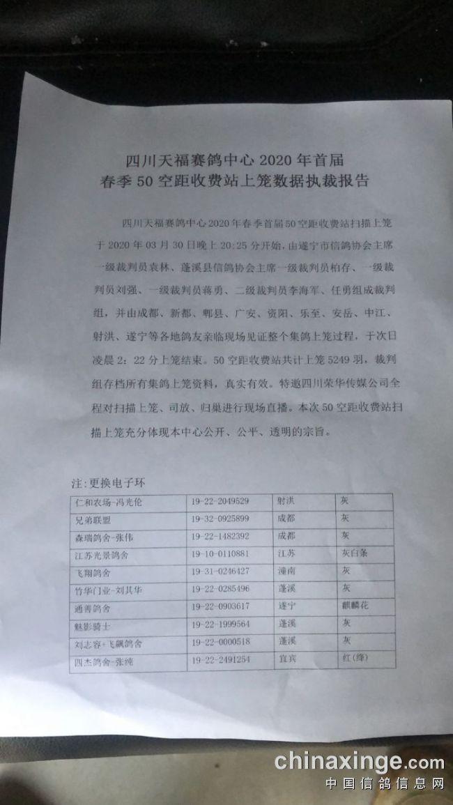 四川天福首届清棚集鸽5249羽
